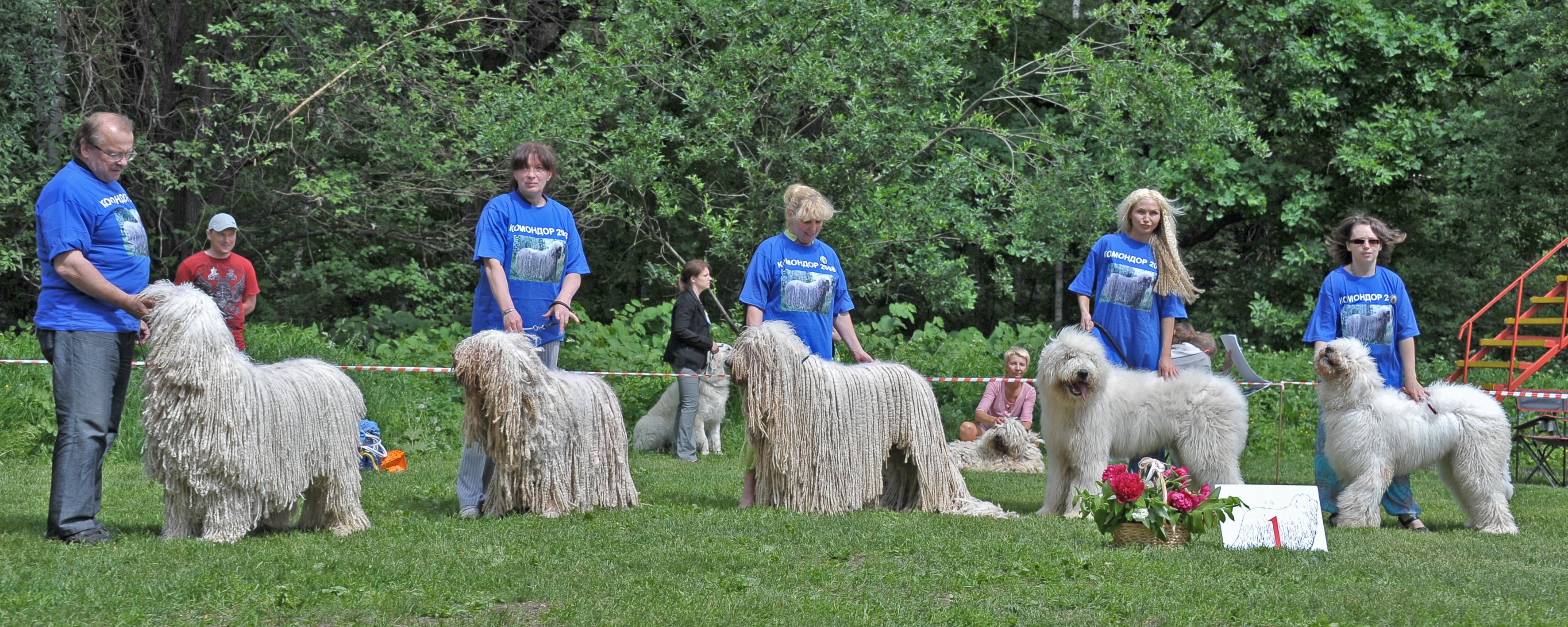 Комондора (венгерской овчарки) щенков продаем
