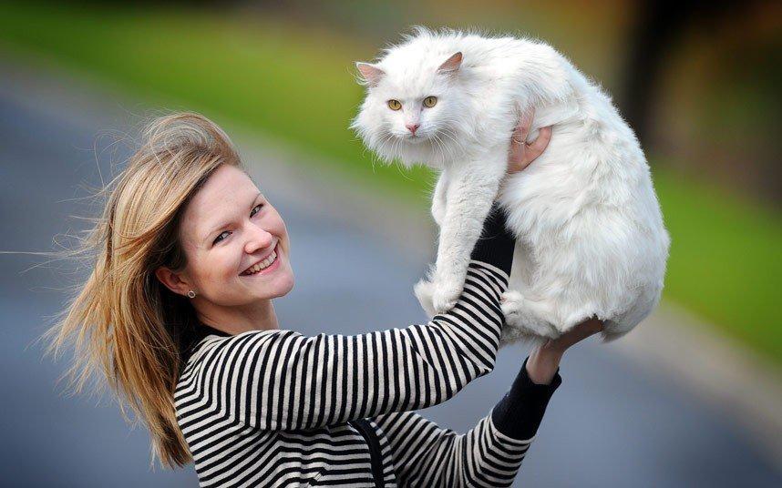 В ленобласти эрмитажный кот фёдор сбежал на выходные из музея кошки