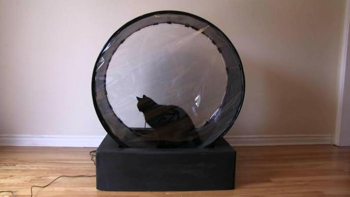 Инженер изобрел беговую дорожку для своей тучной кошки