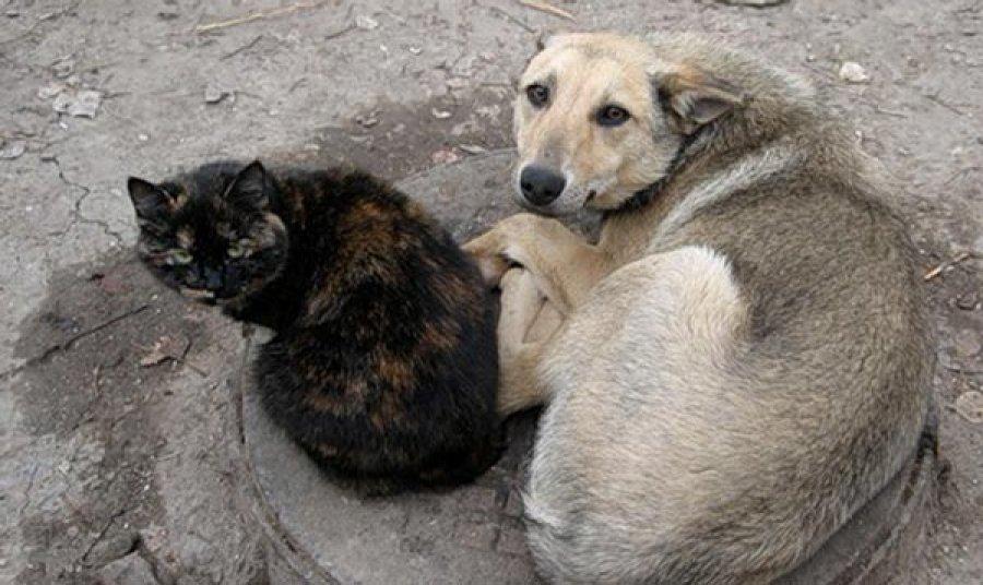 Бродячие животные стали одной из